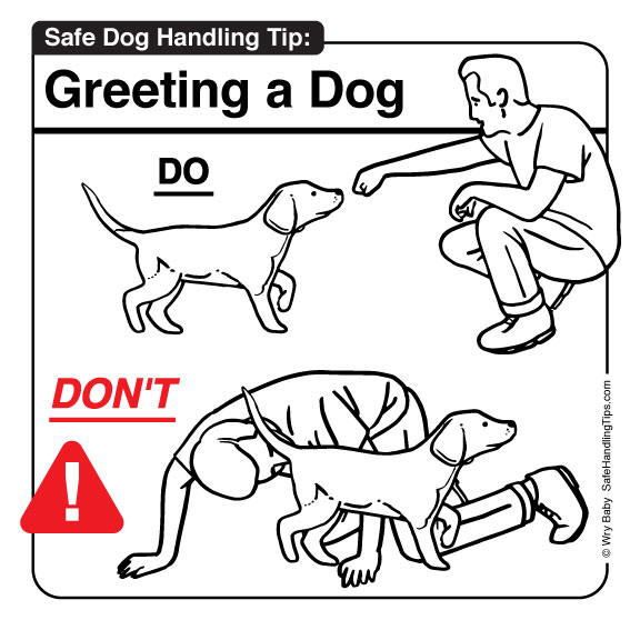 how  and how not  to greet an unfamiliar dog